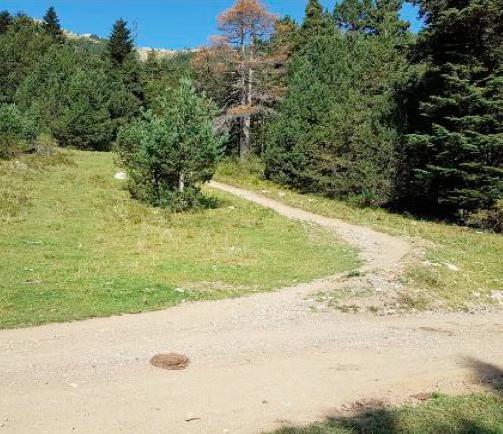 Recorregut del bike park a La Molina